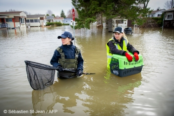 Animal Rescue. Floods in progress at Sainte-Marthe-sur-le-Lac in the suburbs of Montreal, Quebec, Canada on Monday, April 29, 2019. Animal rescue team PHOTO: SEBASTIEN ST-JEAN
